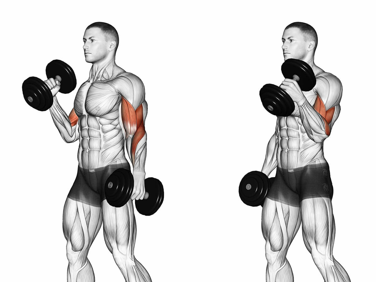 Упражнения с гантелями в домашних условиях для мужчин: топ 20