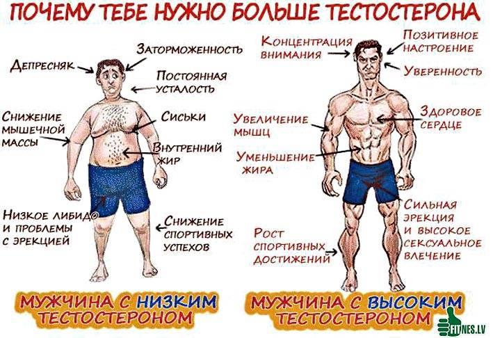 Низкий тестостерон: симптомы, причины, лечение у мужчин