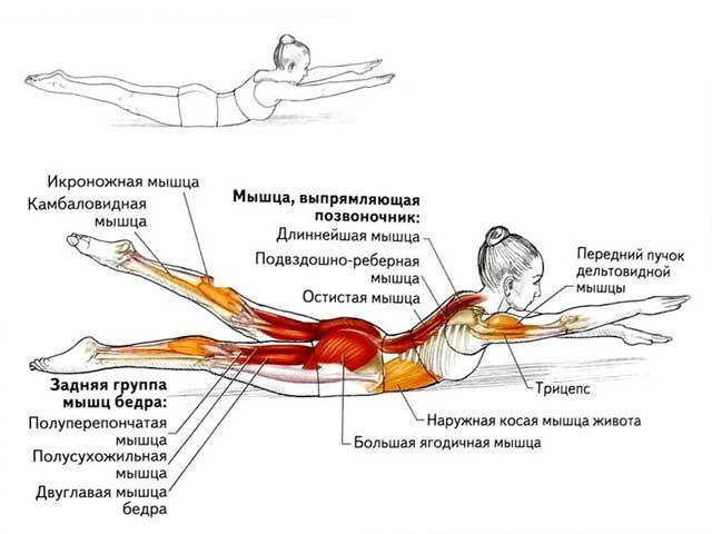 Разгибатели спины: техника выполнения упражнений, эффективность, советы тренеров