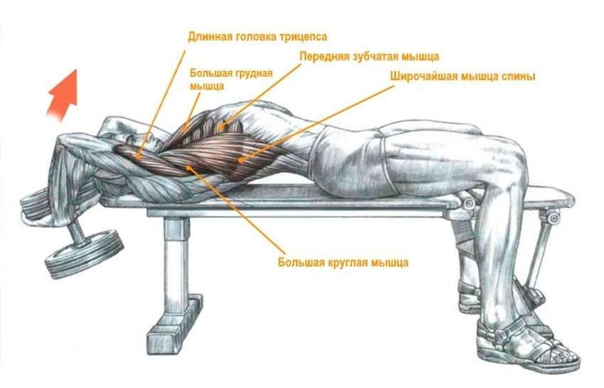 Упражнение пуловер лежа на скамье с гантелью и штангой для грудных мышц, трицепса и спины