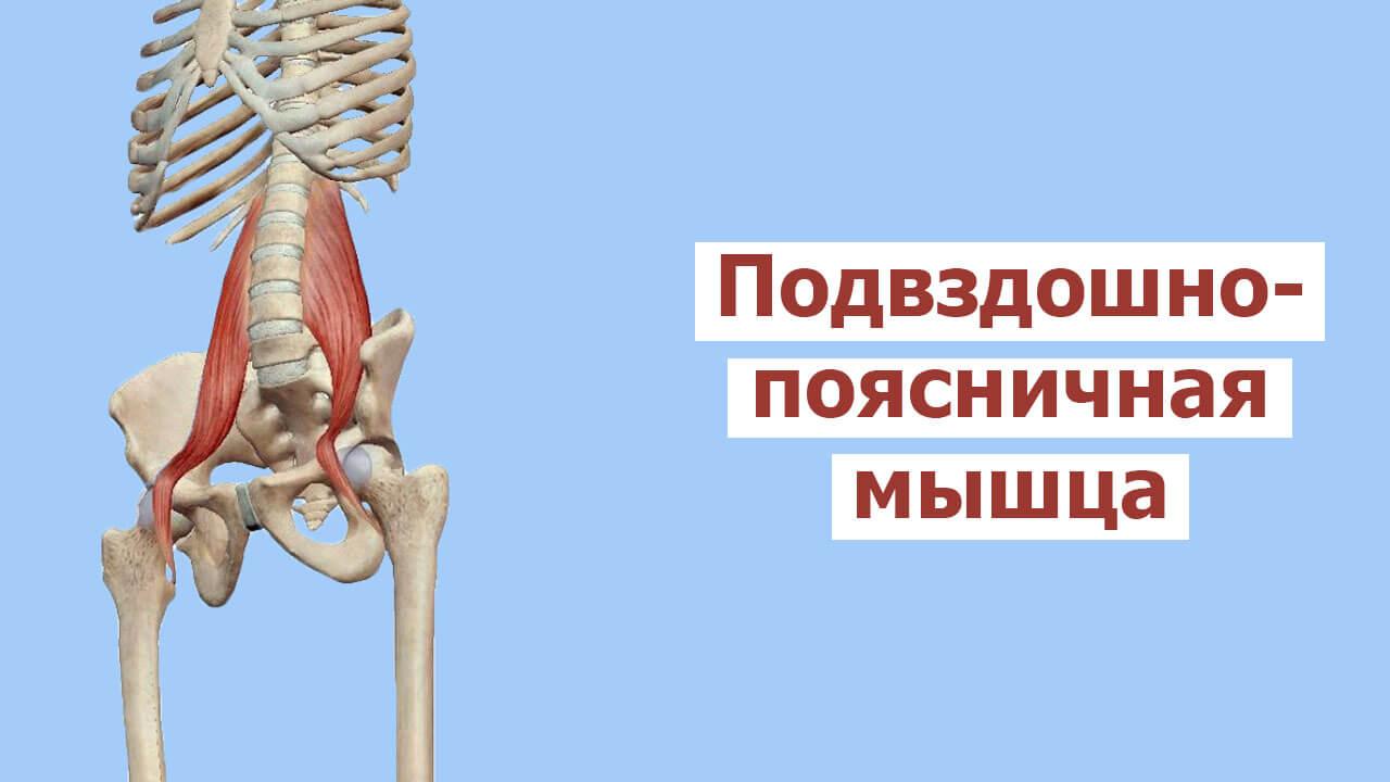 Все о подвздошно-поясничной мышце: упражнения на укрепления и растяжку