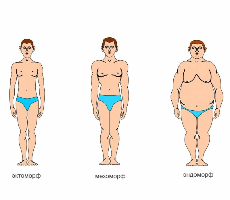 Типы телосложения: отличительные особенности эктоморфов, эндоморфов и мезоморфов