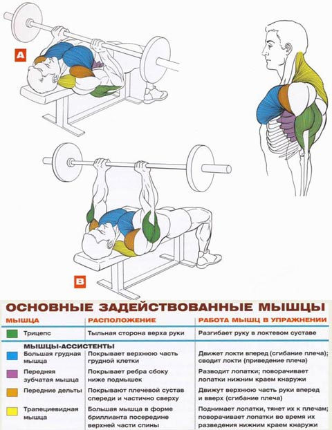 Жим штанги узким хватом! крутое упражнение для роста ваших трицепсов