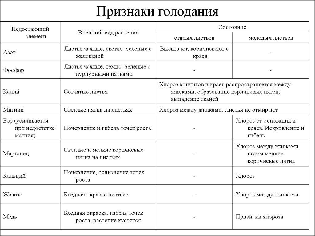 Интервальное голодание 20/4: схема для похудения
