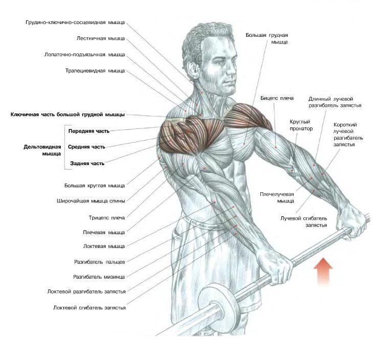 Выпады с гантелями: техника выполнения, какие мышцы работают