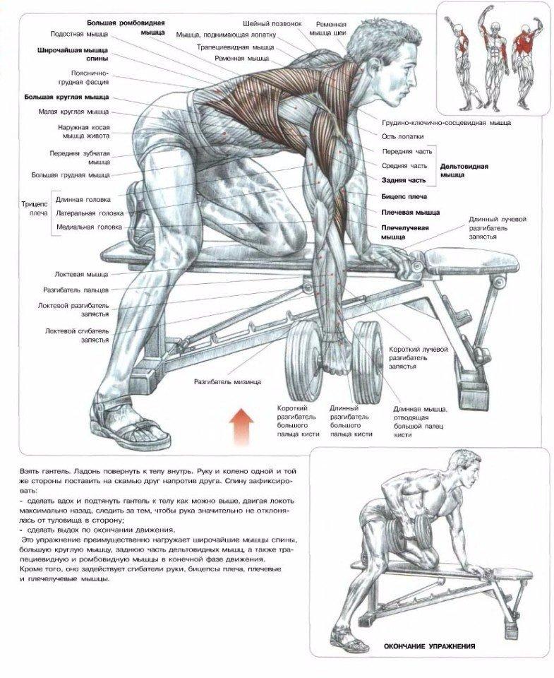 Упражнения: накачать титанскую спину