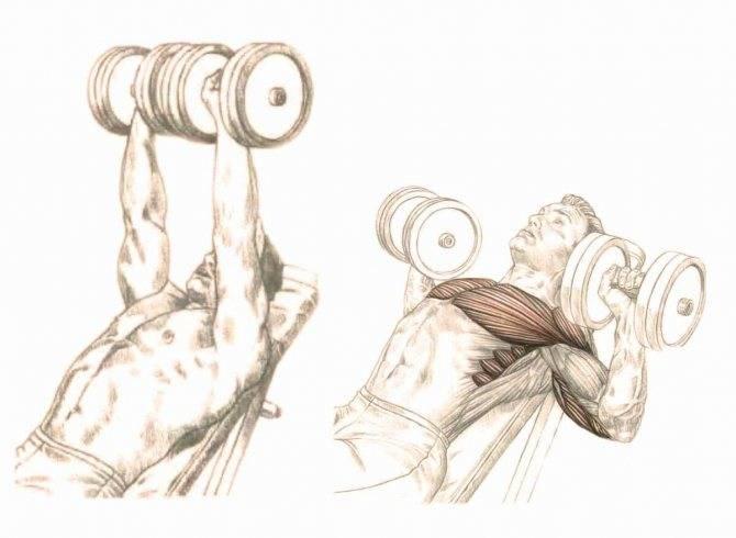 Тяга гантели в наклоне одной рукой к поясу: техника выполнения в упоре на скамье и стоя