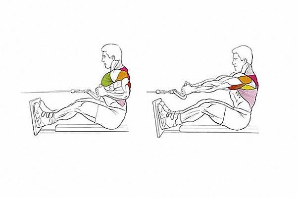 Тяга горизонтального блока – популярность упражнения и ее причины