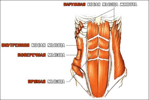 Упражнения на косые мышцы живота от известного тренера - 6 минут