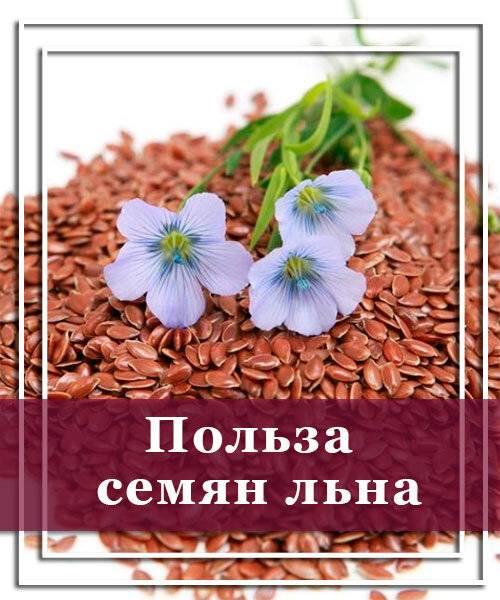 Семена льна польза и вред, как принимать, полезные свойства и противопоказания