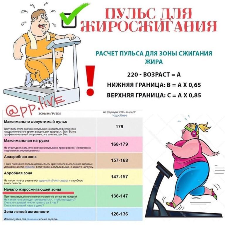Пульс для сжигания жира: расчет для мужчин и женщин, формула, особенности