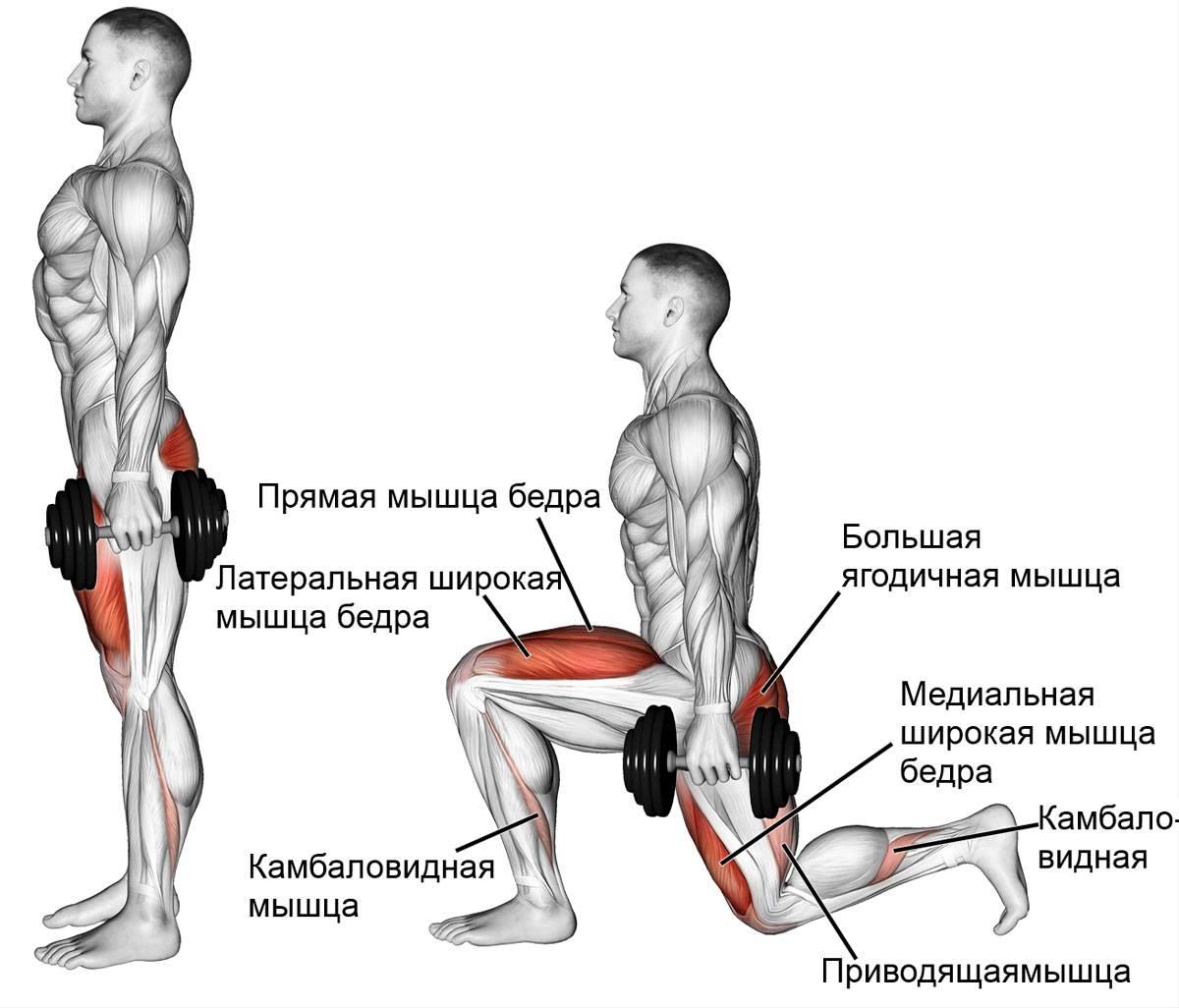 Болгарские выпады - варианты выполнения болгарских сплит выпадов с гантелями, со штангой и их эффективность
