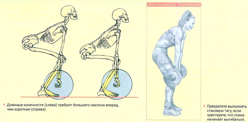 Становая тяга для женщин: техника выполнения упражнения со штангой