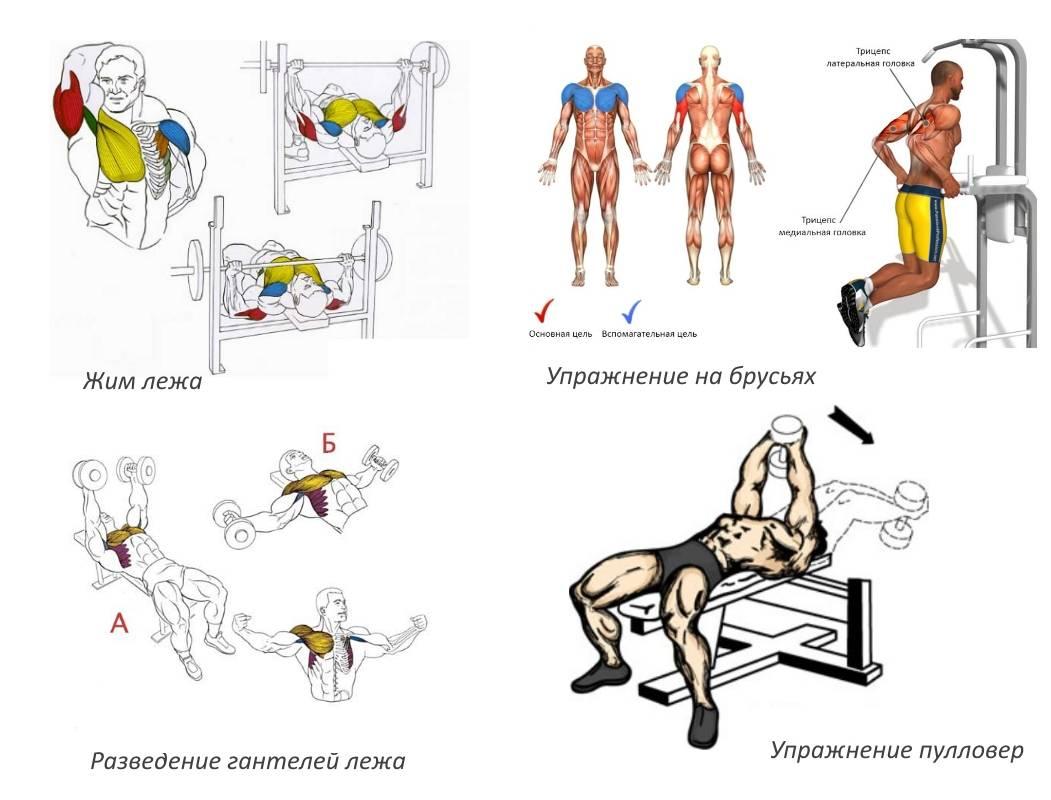 Программа тренировок грудь бицепс - всё о спортивных тренировках