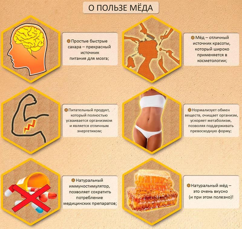 Полезные свойства меда для организма - от чего он действительно лечит