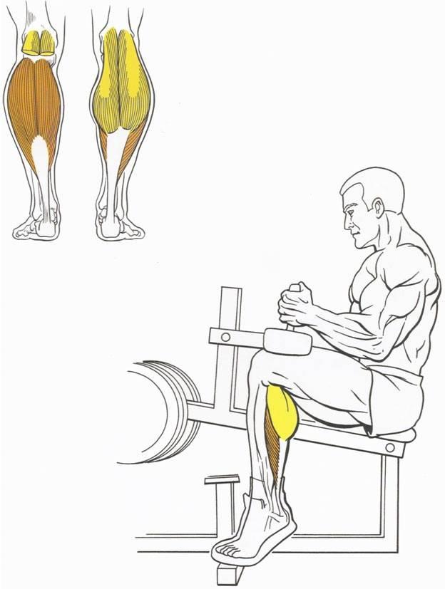 Упражнение ослик на икры в бодибилдинге — техника, работа мышц - от инфекции