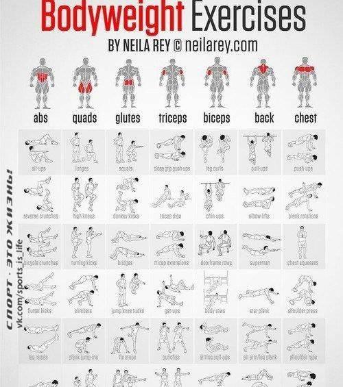 6 упражнений для всех групп мышц