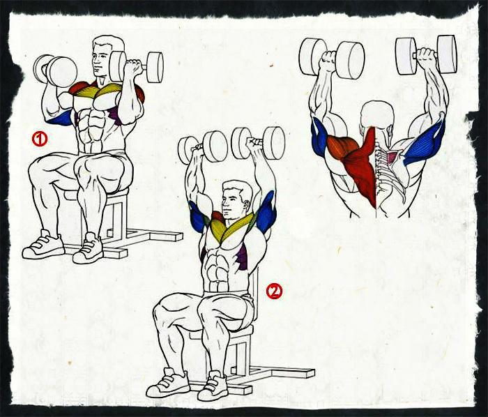 Жим арнольда - техника выполнения жима арнольда для девушек и для мужчин. самые эффективные упражнения от арни