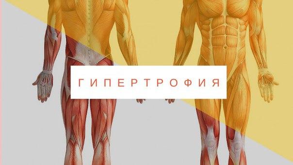 Гипертрофия мышц, что это такое. гипертрофия мышц. бодибилдинг - ликбез:, что такое гипертрофия мышц. | здоровое питание