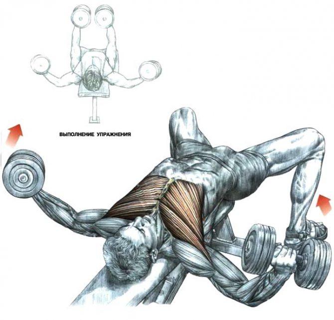 Разведение гантелей лежа, особенности, польза, включение в тренировки