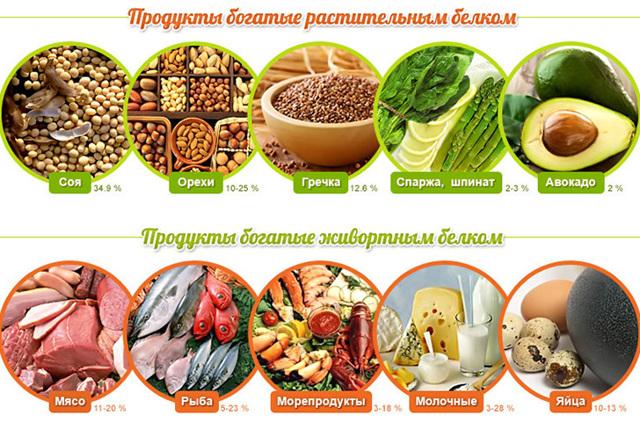 Животный белок. источники животного белка, его усвояемость, польза и вред.