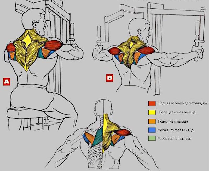 Сведения рук в тренажёре делаем грудь рельефной