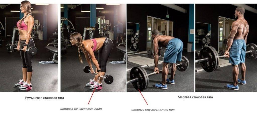 Румынская тяга со штангой: техника выполнения, какие мышцы работают