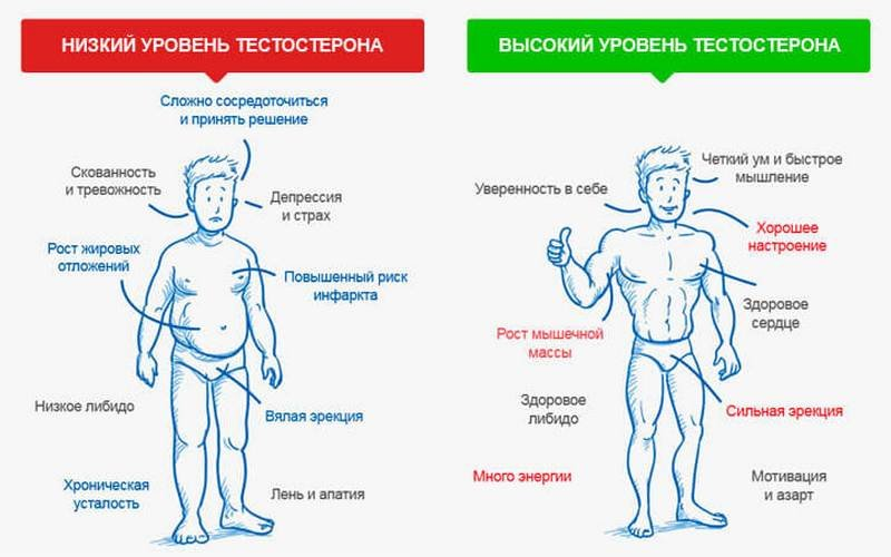 Воздержание и тестостерон - как влияет на потенцию