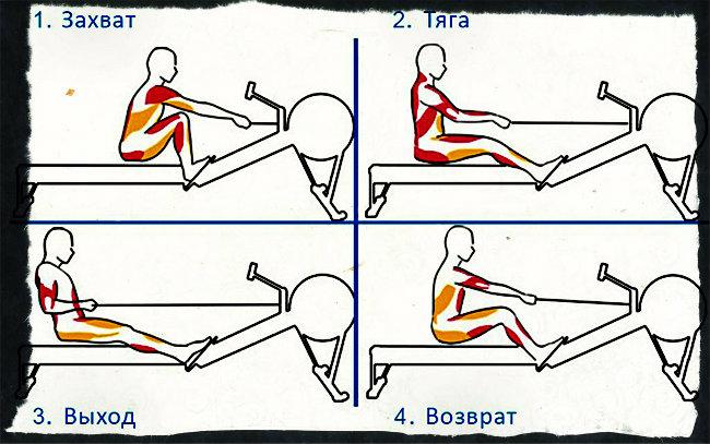 """Тренажер """"гребля"""": как правильно заниматься, какие мышцы работают"""